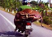 越南-明信片:Buffalo Dealer.jpg