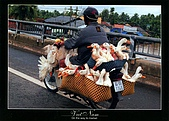 越南-明信片:On the way to market.jpg