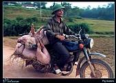 越南-明信片:Pig dealers.jpg