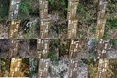 玉山主峰行:登山口_排雲 8k5 里程牌.jpg
