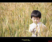 大雅-小麥香:大雅麥田029.jpg