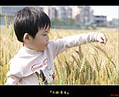 大雅-小麥香:大雅麥田015.jpg