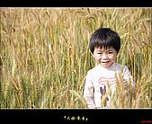 大雅-小麥香:大雅麥田030.jpg