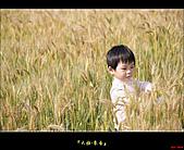 大雅-小麥香:大雅麥田031.jpg