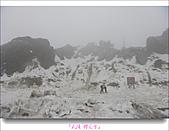 2011武陵舞櫻花:武陵櫻花雪001.jpg