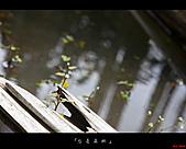 2010忘憂森林:忘憂森林076.jpg
