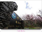 2011武陵舞櫻花:武陵櫻花雪006.jpg