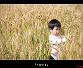 大雅-小麥香:大雅麥田027.jpg