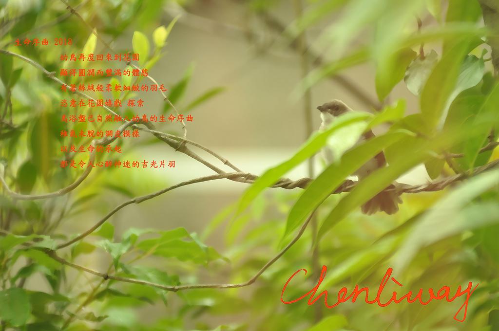 20180619 chenliway ~ 生命序曲 生命詩篇 生態印象 - 20180619  生命序曲 生命詩篇 生態印象