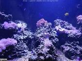 澎湖水族館:IMG_20201011_153724.jpg