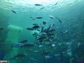 澎湖水族館:IMG_20201011_153818.jpg