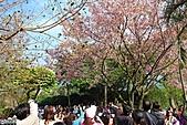 天元宮賞櫻:1000320淡水 076.JPG