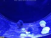 澎湖水族館:IMG_20201011_155702.jpg
