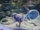 澎湖水族館:IMG_20201011_155210.jpg