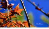 20100211 藍天。旅行:02.jpg