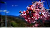 20100211 藍天。旅行:03.jpg