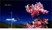 20100211 藍天。旅行:04.jpg