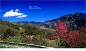20100211 藍天。旅行:06.jpg