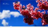 20100211 藍天。旅行:12.jpg