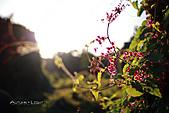 部落格用照片:Autumn。Light.jpg