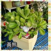 多肉植物: