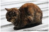 東京的貓咪:cat 04.jpg