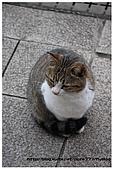 東京的貓咪:cat 06.jpg