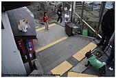 東京的貓咪:cat 09.jpg