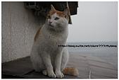 東京的貓咪:cat 02.jpg