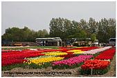 荷蘭霍肯沃夫鬱金香公園:32.jpg