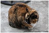 東京的貓咪:cat 05.jpg