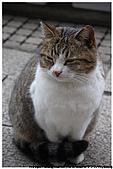 東京的貓咪:cat 07.jpg