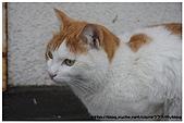 東京的貓咪:cat 03.jpg