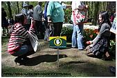 荷蘭霍肯沃夫鬱金香公園:20.jpg