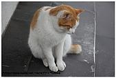 東京的貓咪:cat 01.jpg