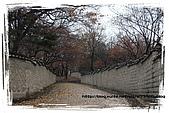 2008.DEC.韓國&北緯三十八度:23.jpg