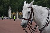 倫敦一日遊:白馬