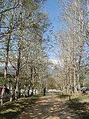 台東三日遊(二):楓林步道