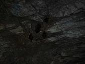 白楊步道:DSC02058蝙蝠.jpg