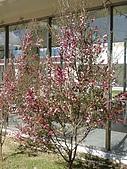 福壽山農場:DSC09861-1.jpg