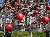 福壽山農場:DSC09869.jpg