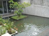 勝洋水草餐廳~來吃水草餐:DSC06689.jpg