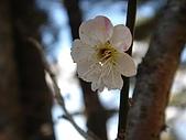 福壽山農場:DSC09892.jpg