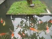 勝洋水草餐廳~來吃水草餐:DSC06695.jpg