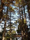 福壽山農場:DSC09922-1.jpg