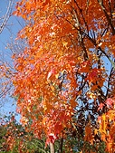武陵農場:DSC09793-1.jpg