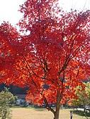 武陵農場:DSC09802-1.jpg