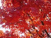 武陵農場:DSC09804.jpg