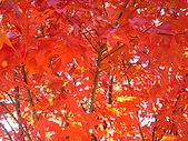 武陵農場:DSC09805.jpg