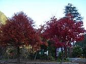 武陵農場:DSC09831.jpg